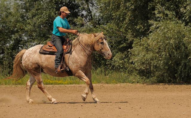 Westernová sedla pro rekreaci i sport